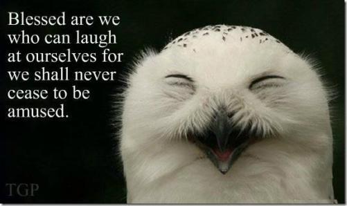 owl laughing