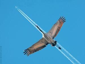 flying co